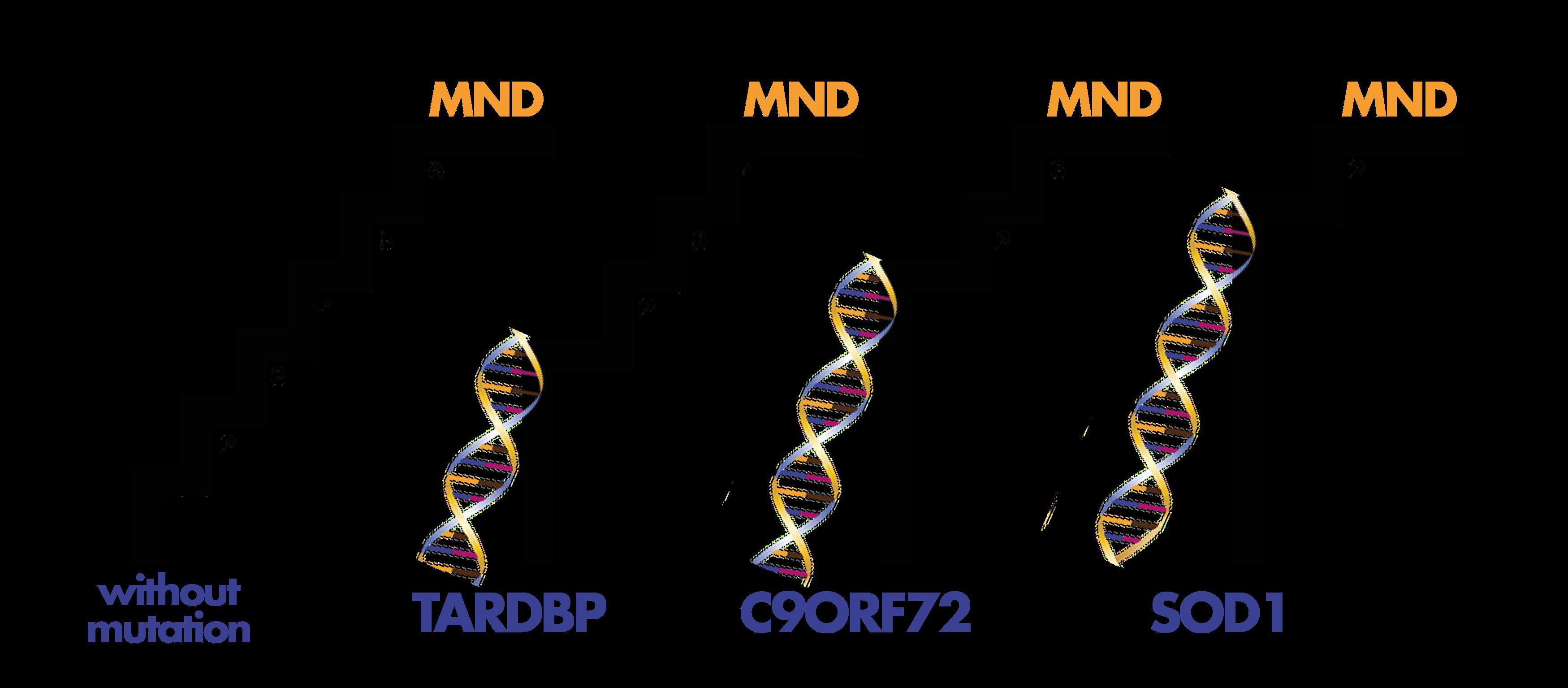 Steps to understanding MND